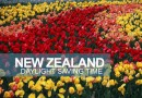 New Zealand Daylight Saving Time